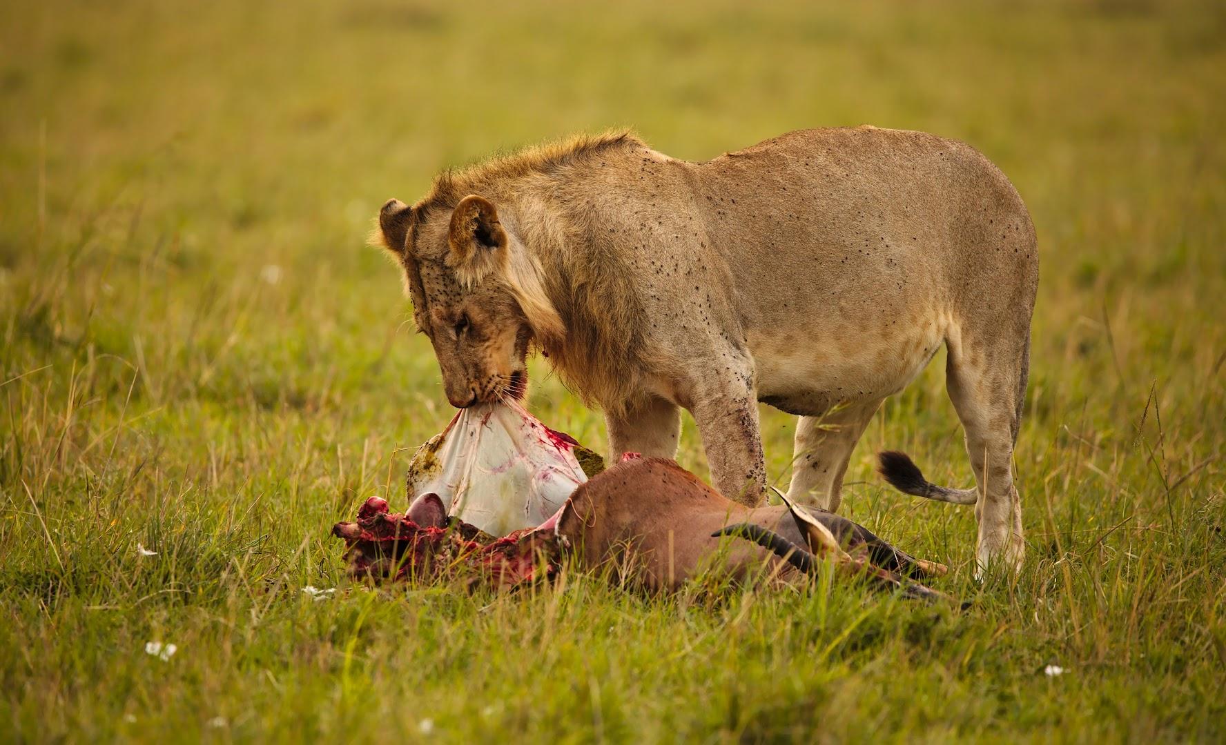 While animal kingdom is waking up...