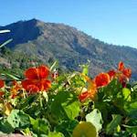 Tara Devi hill from Sunrise Villa