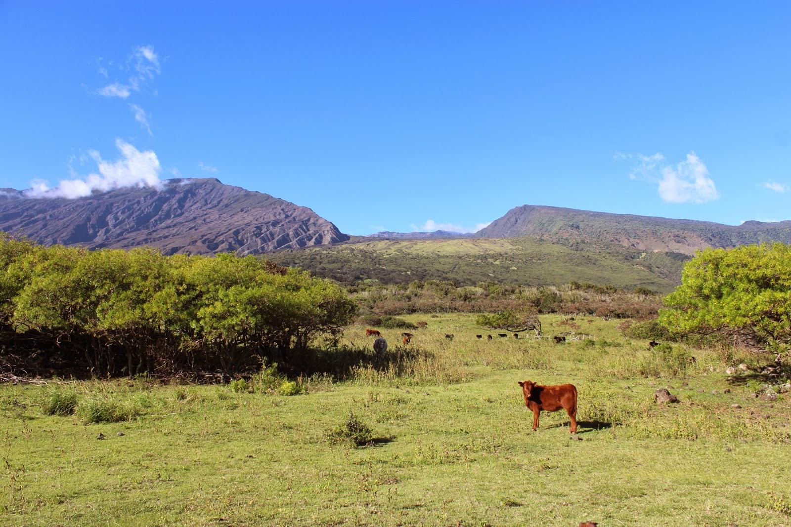 Kaupo Gap on the back side of Haleakala