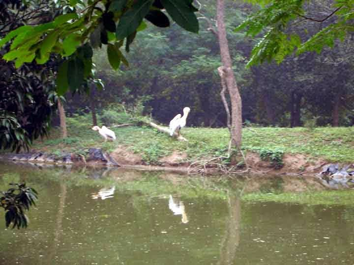 cranes at Chattbir zoo Chandigarh