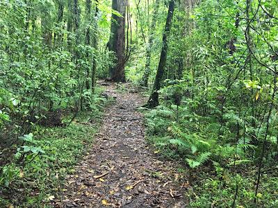 Hongis track between Lake Rotoiti and Rotoehu