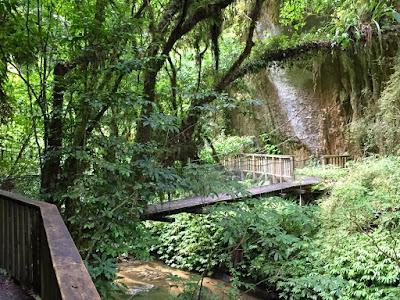 Mangapohue Scenic Reserve (Natural bridge)