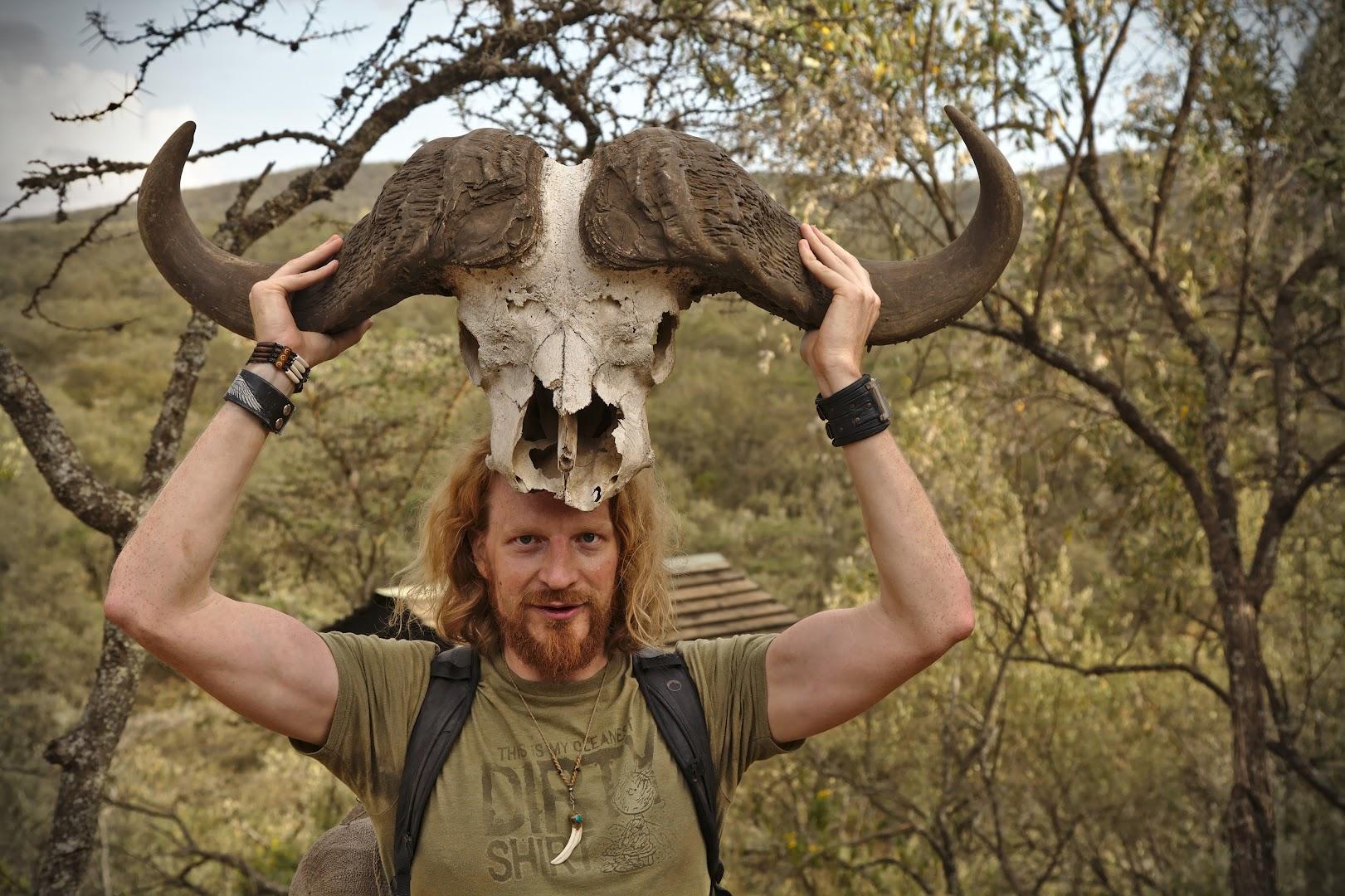 Buffalo's head is big