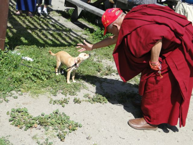 Lama Zopa Rinpoche blessing small dog at the beach in CA, USA