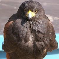 Opening Speeltuin en Roofvogelshow 17 maart 2007 - Nr_018