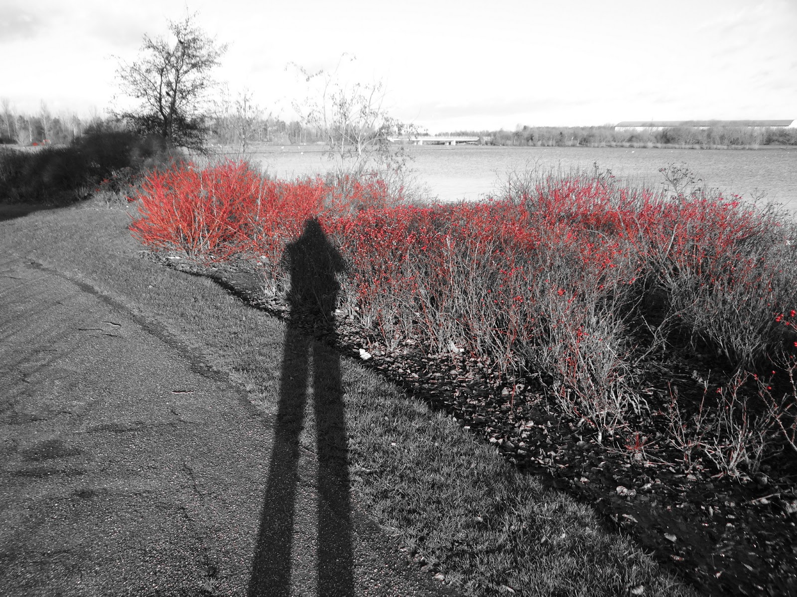 Pathway with Red Filter