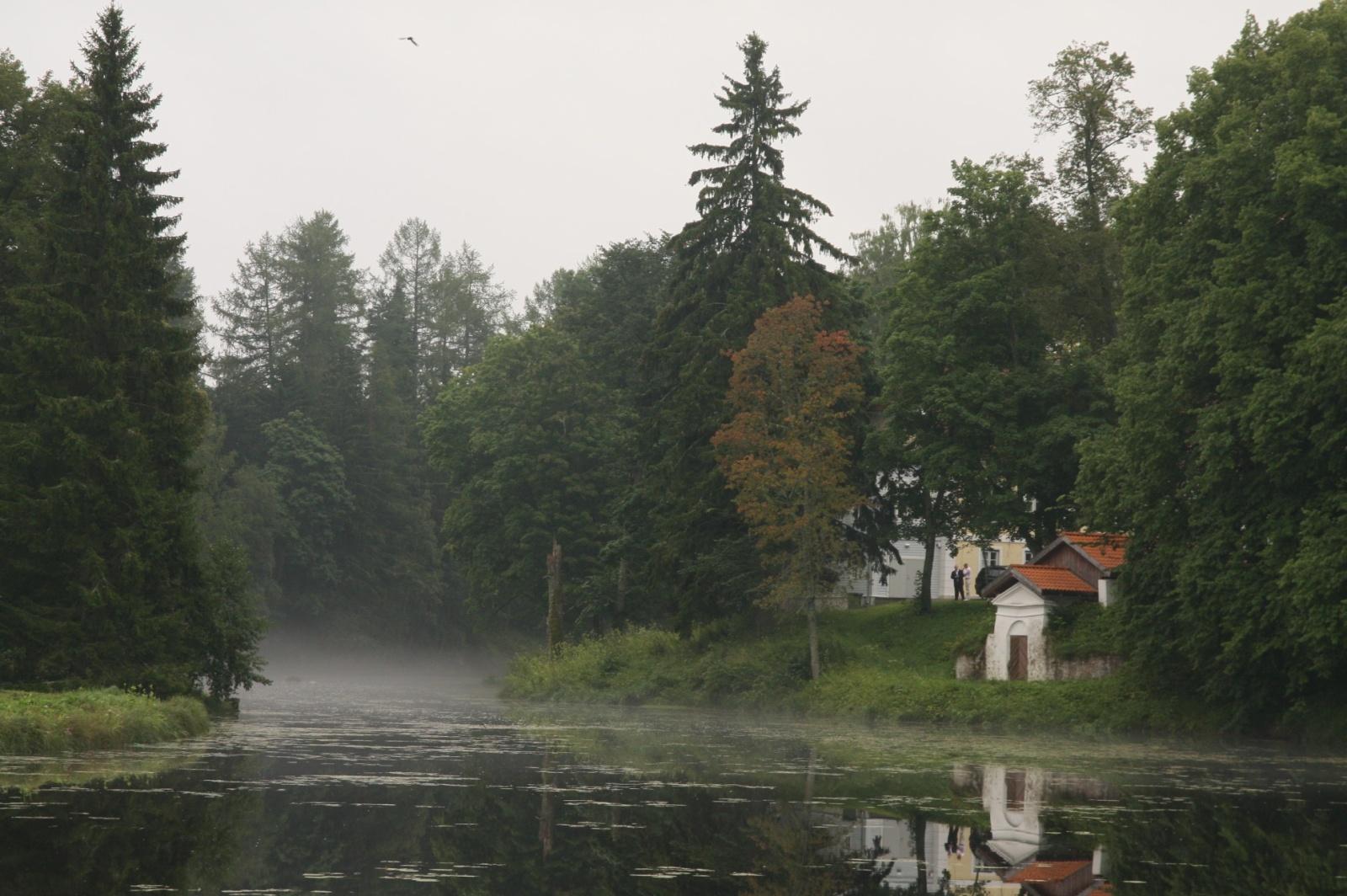 Foggy manor