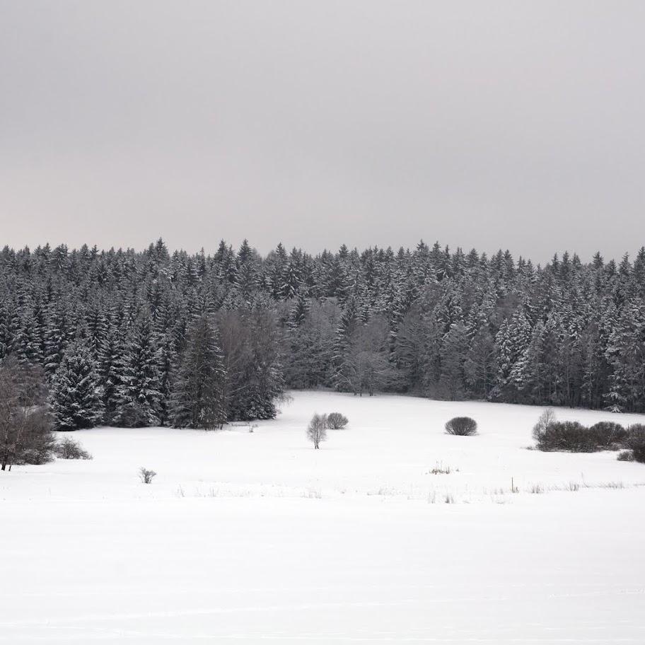 Zimní větvičky 2010 - _DSC9761