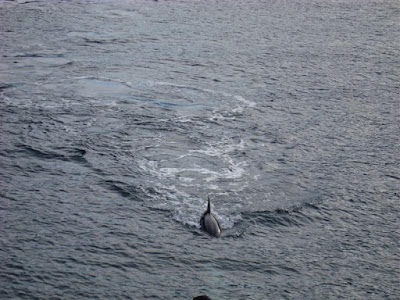 Dolphins (more later)
