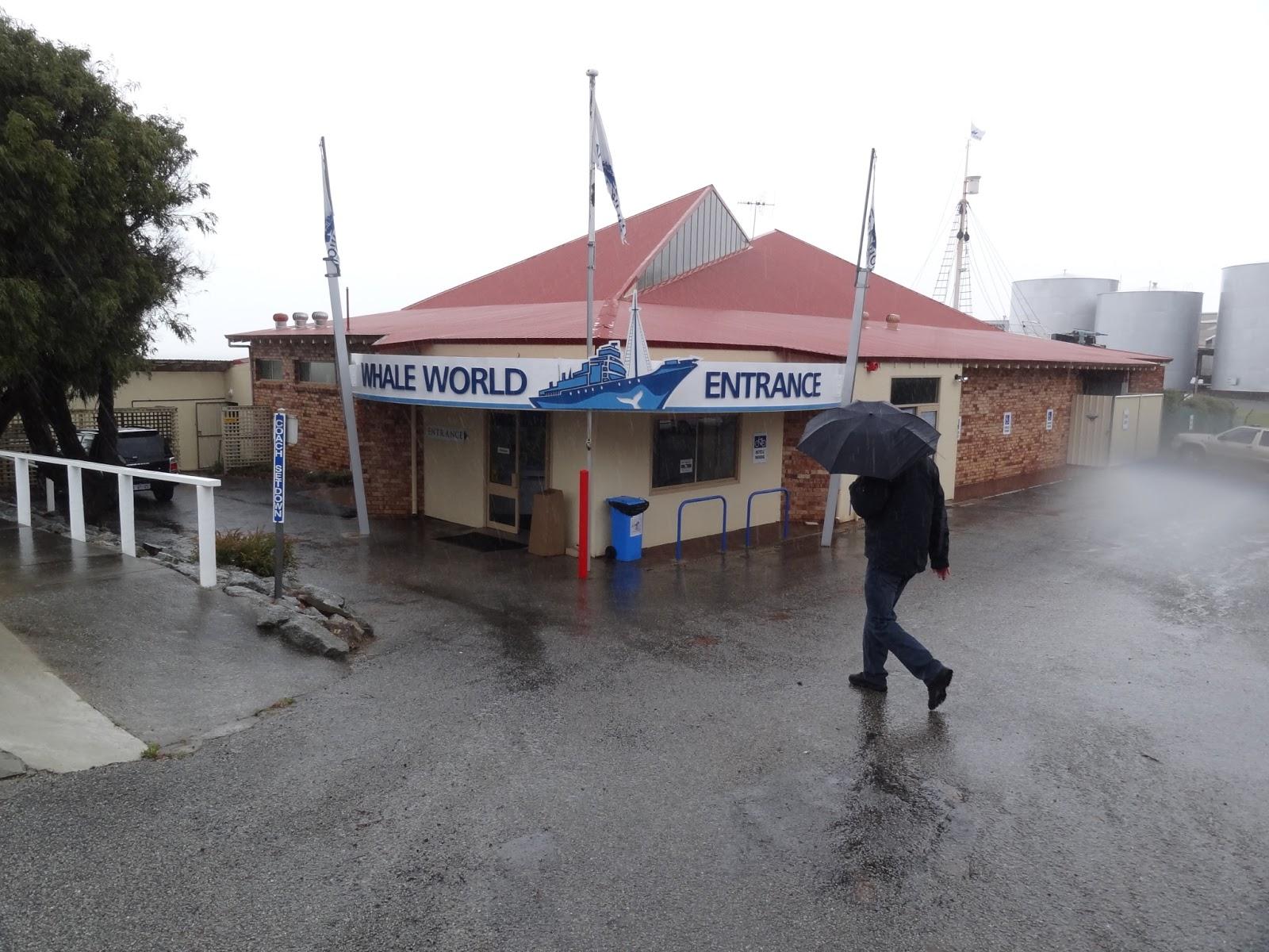Whale World - in the rain
