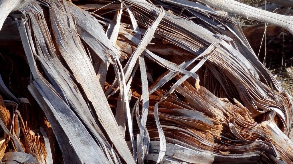 mišićno tkivo drveta