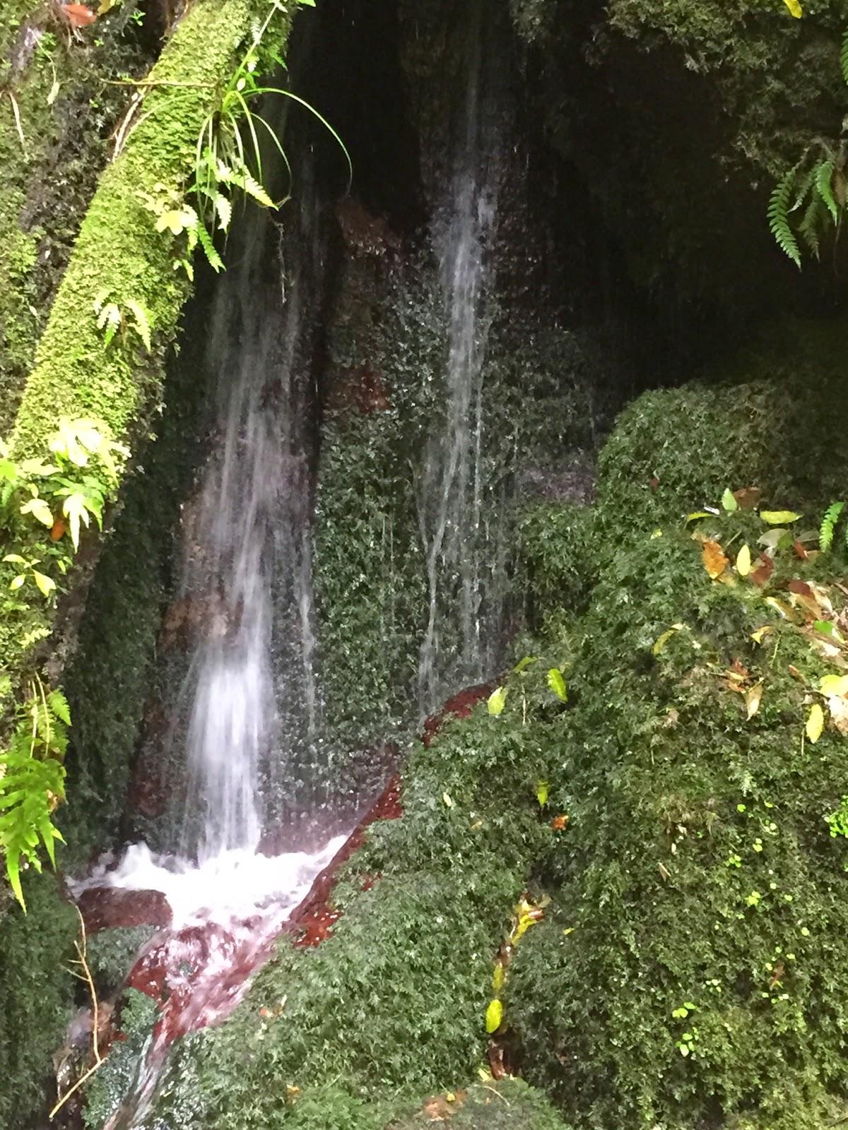 The cascades on the Te Auheke track