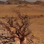 Water-greedy dry plant