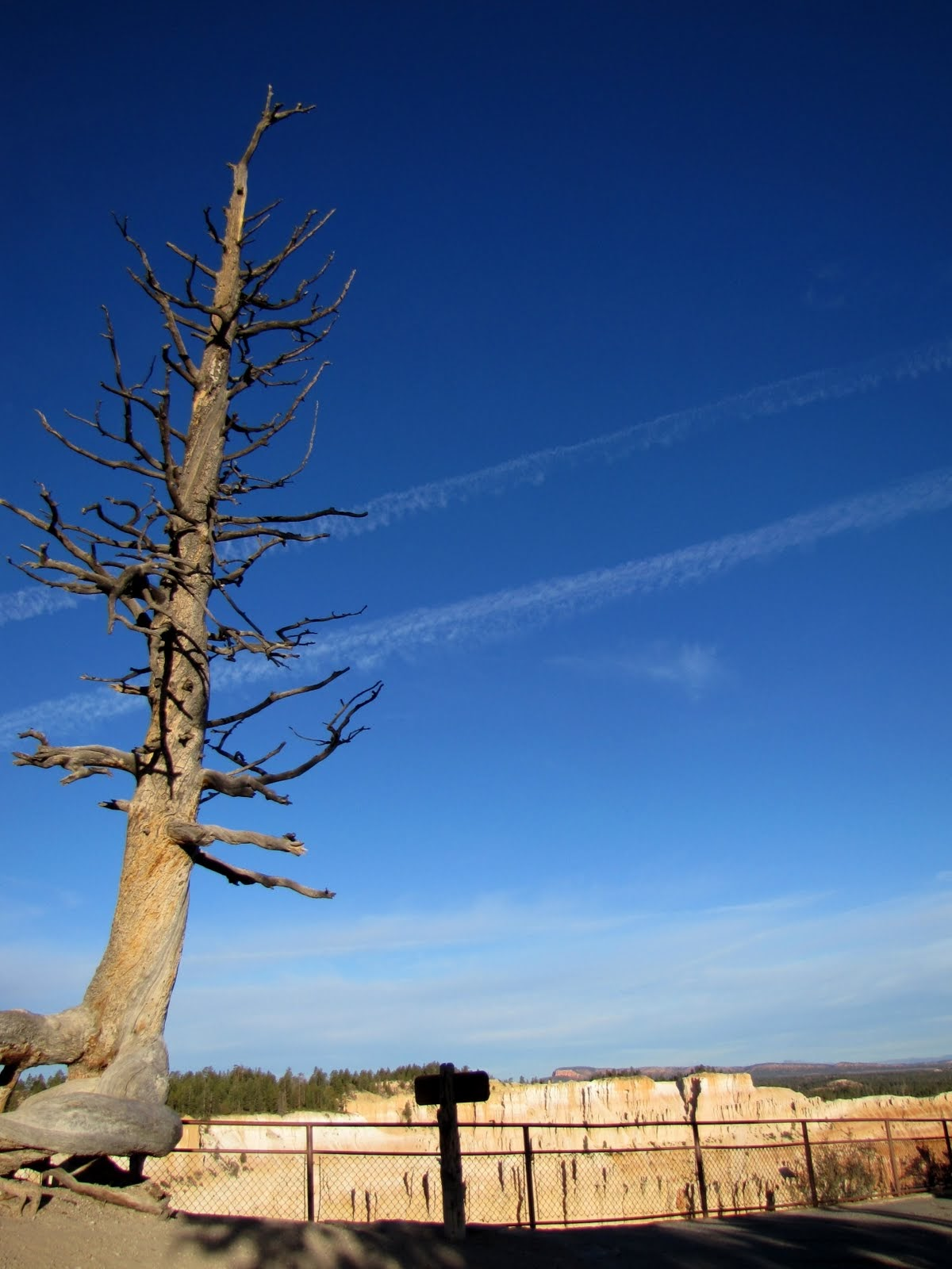 Levitating Tree