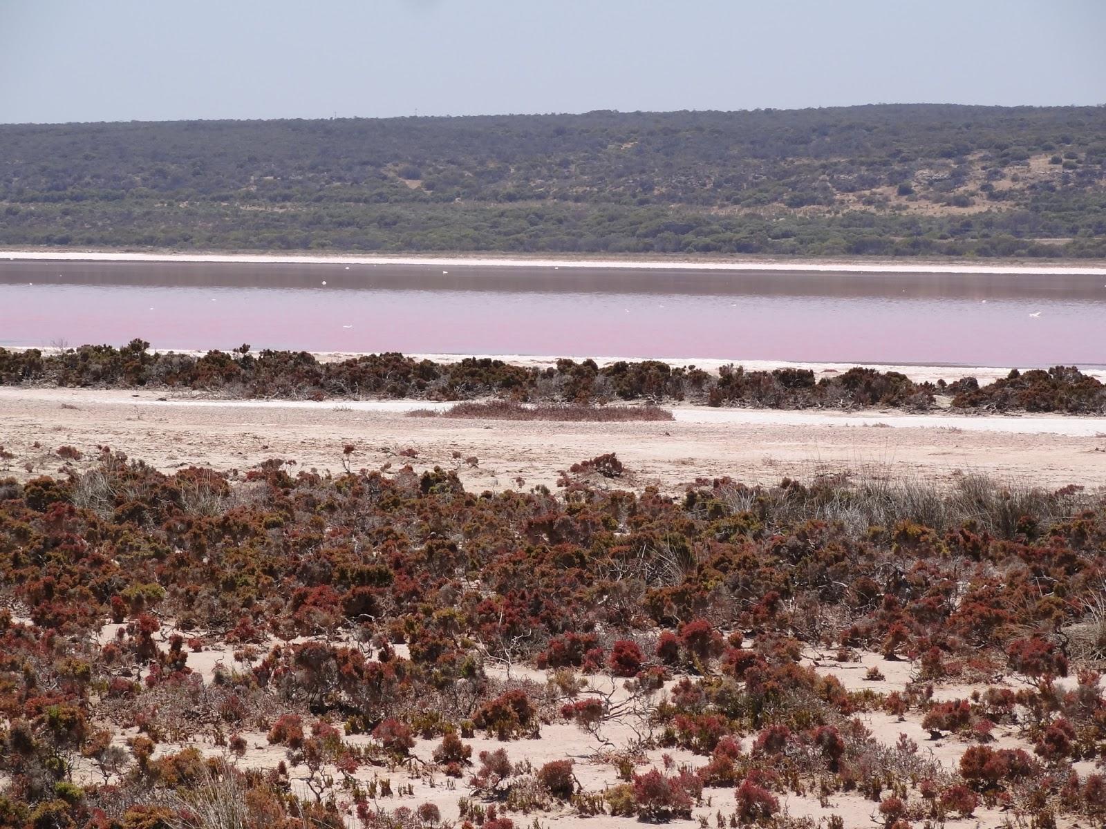Pink salt ponds near Port Gregory