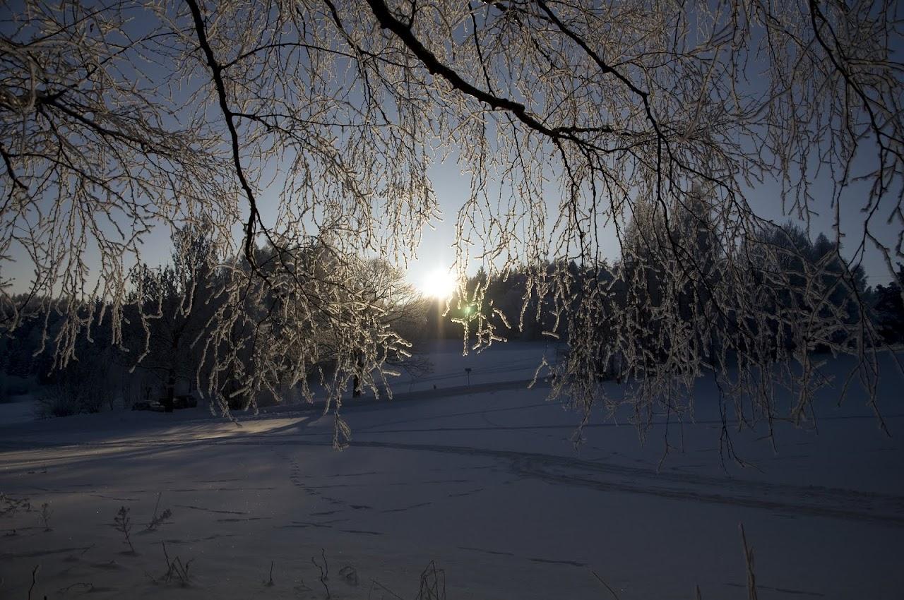 Zimní větvičky 2010 - _DSC9939