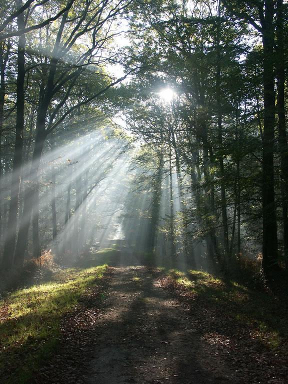Percées de lumière dans la forêt du château