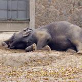 ZOO Liberec chová dvě slonice - Rání a Gaurí.