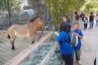 Zoo (4)R