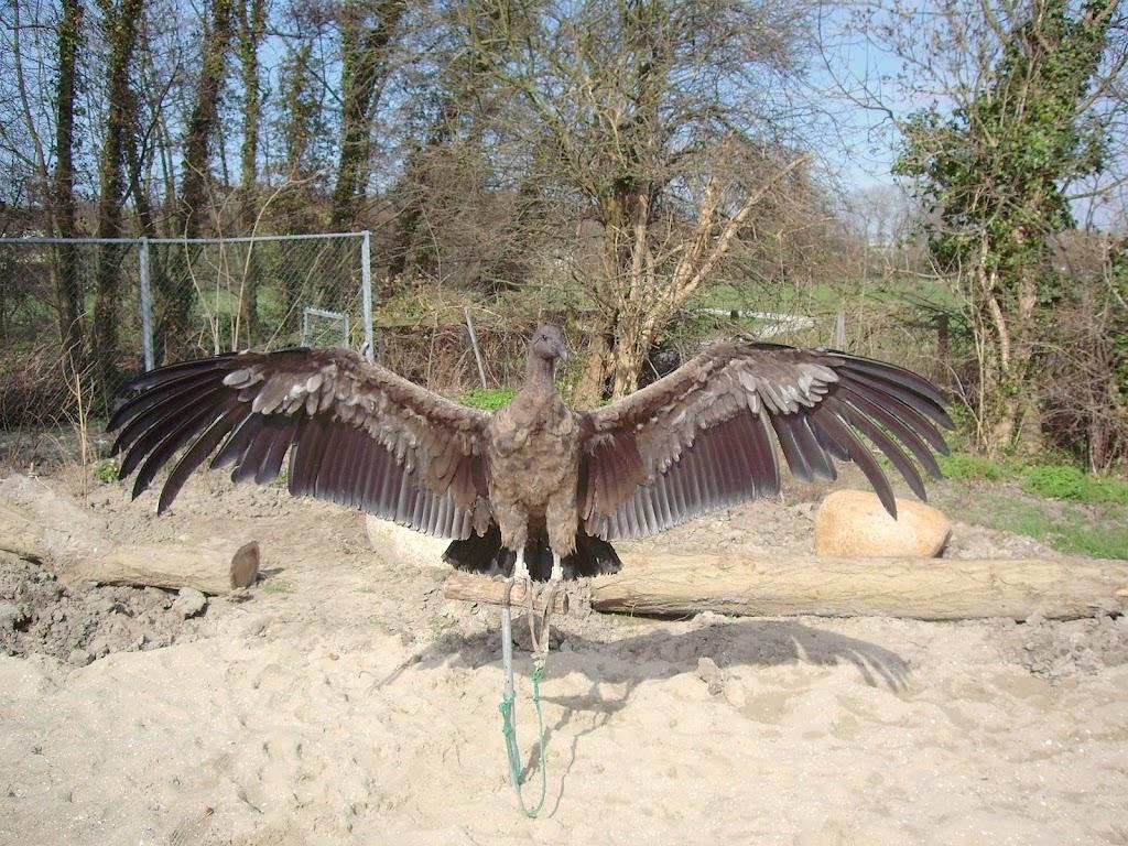 Opening Speeltuin en Roofvogelshow 17 maart 2007 - Nr_005