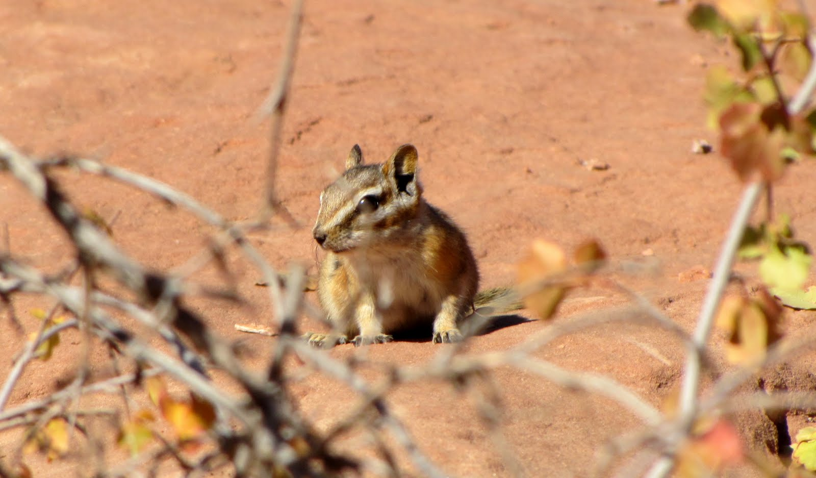 Chipmunk in Arches
