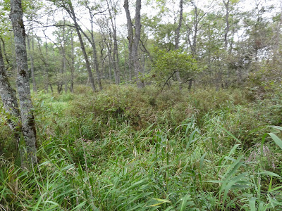 "Some native bush in the ""Hokkaido Zone"" of the zoo"