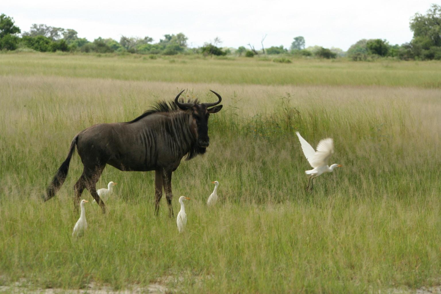 GNU's Not Unix :-)