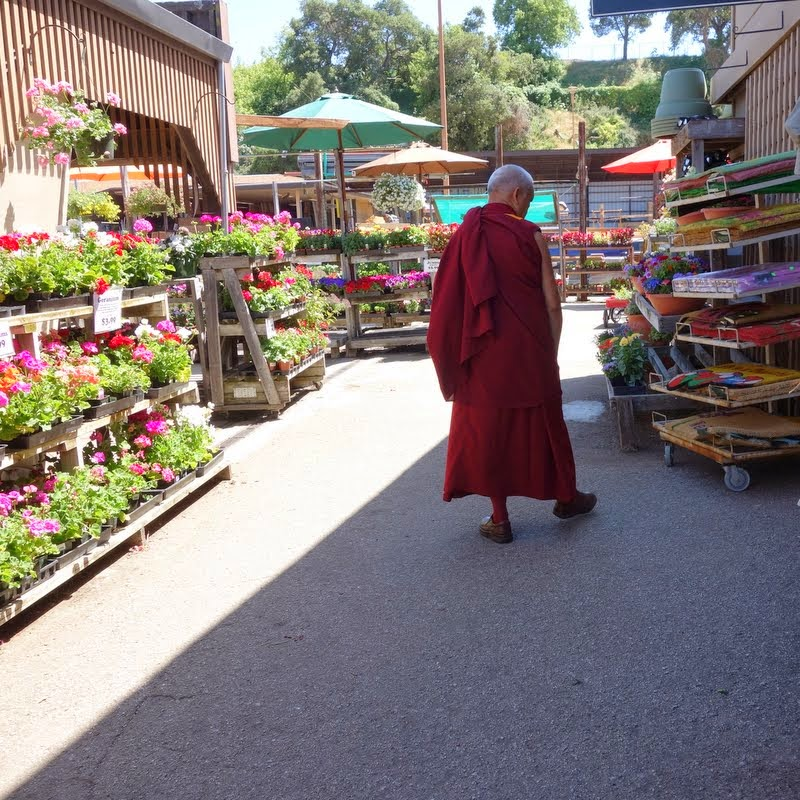 Rinpoche at the garden store, Aptos, California, May 2014. Photo by Ven. Roger Kunsang.