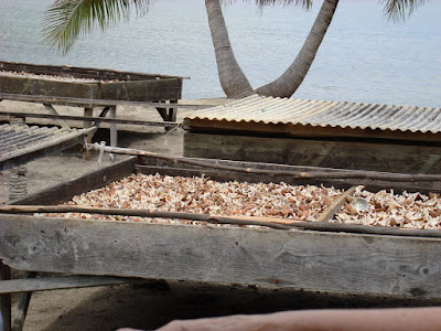 Drying coconuts to make coconut oil