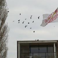 Opening Speeltuin en Roofvogelshow 17 maart 2007 - Nr_162