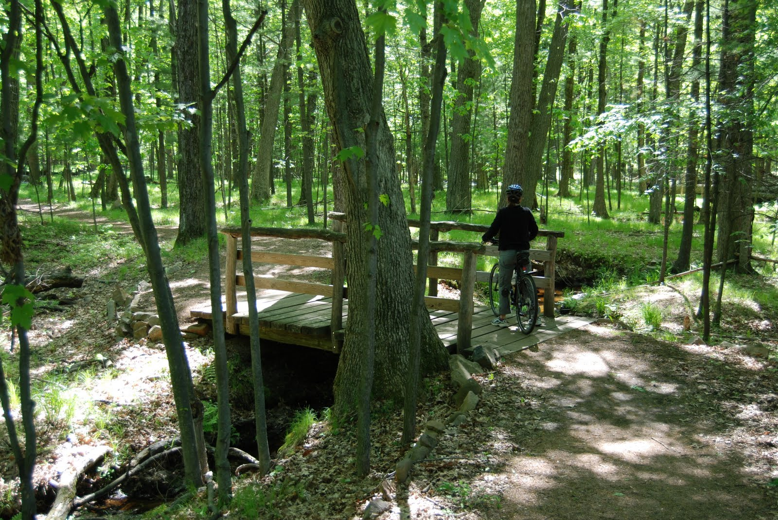 Rustic bridge in Schmeeckle Reserve, University Trail