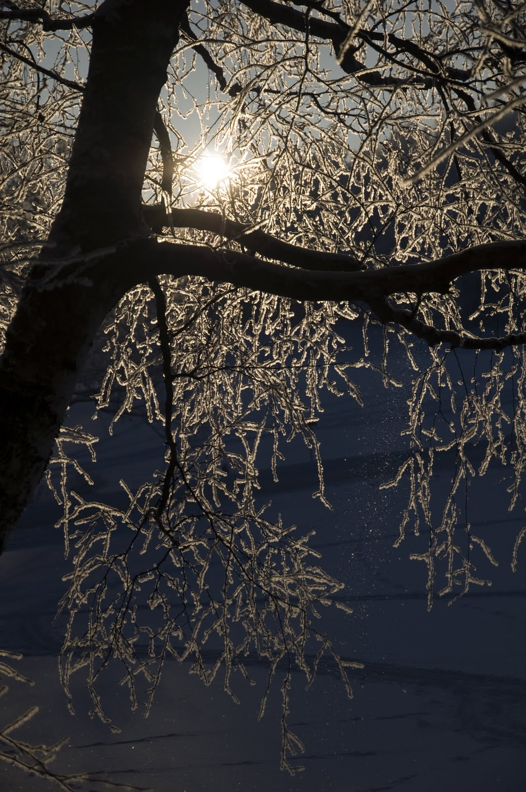 Zimní větvičky 2010 - _DSC9934