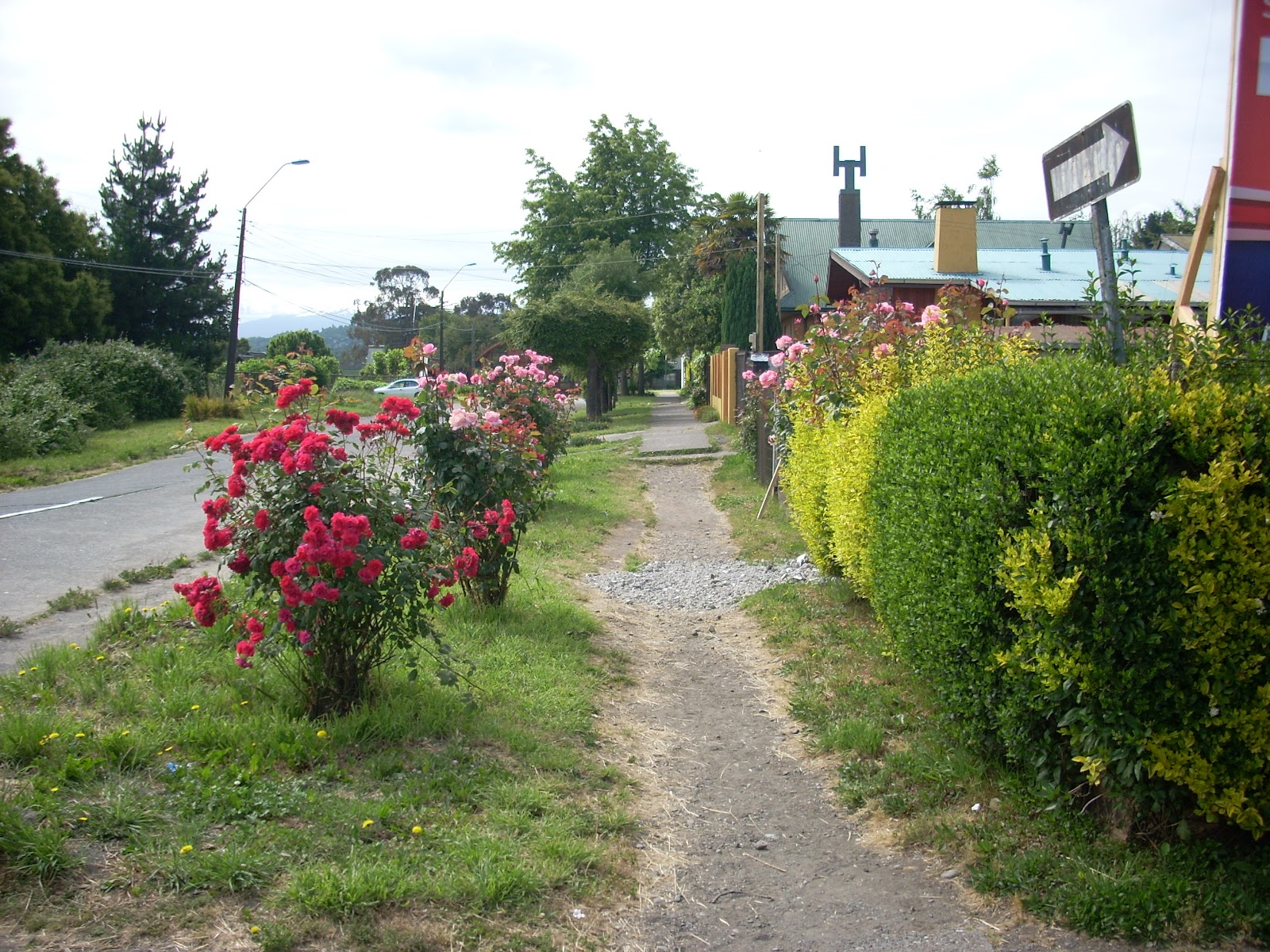 Note the gravel footpath - but then the beautiful roses planted by the owner, who had many more on their property.