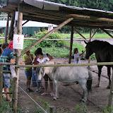 Návštěva na farmě (1)
