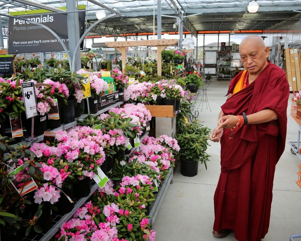 Rinpoche shopping for flowers, Washington, US, April 2014. Photo by Ven. Thubten Kunsang.