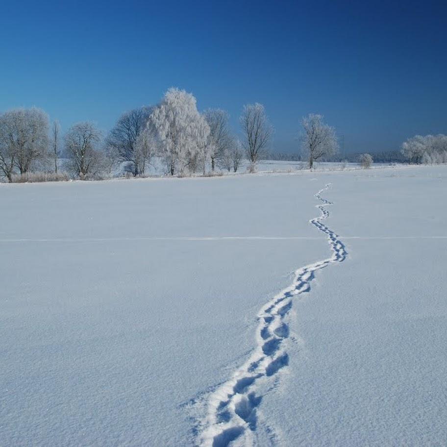 Ladovská zima 2010 - DSC_1560