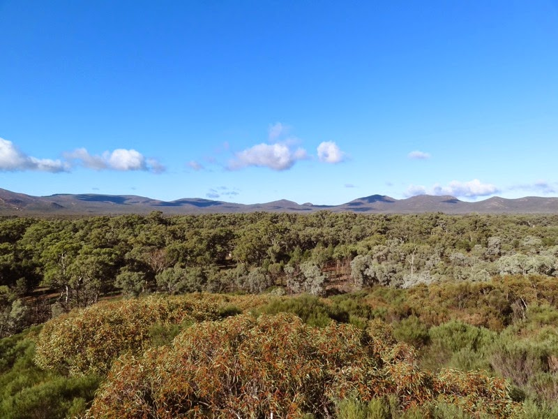 Wangarra lower lookout view of Wilpena Pound