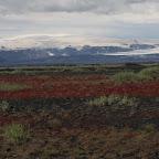 Colorful lichens