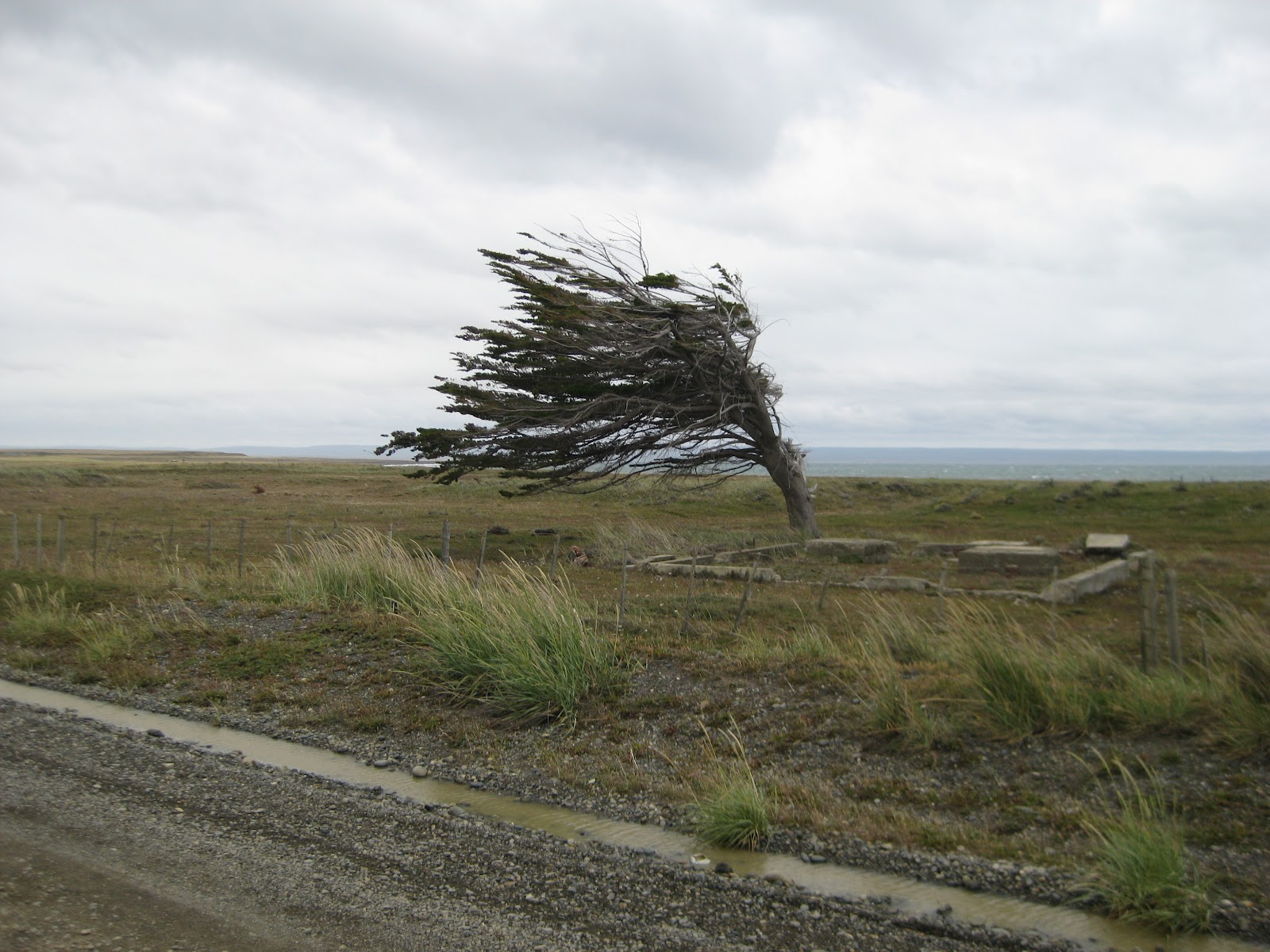 Yes, it is windy. Very, very few trees in northern Tierra del Fuego
