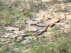 Prva zmija --ne zna se ko s eviše uplašio, ja koja sam odskočila, ili ona koja je promenila boju.