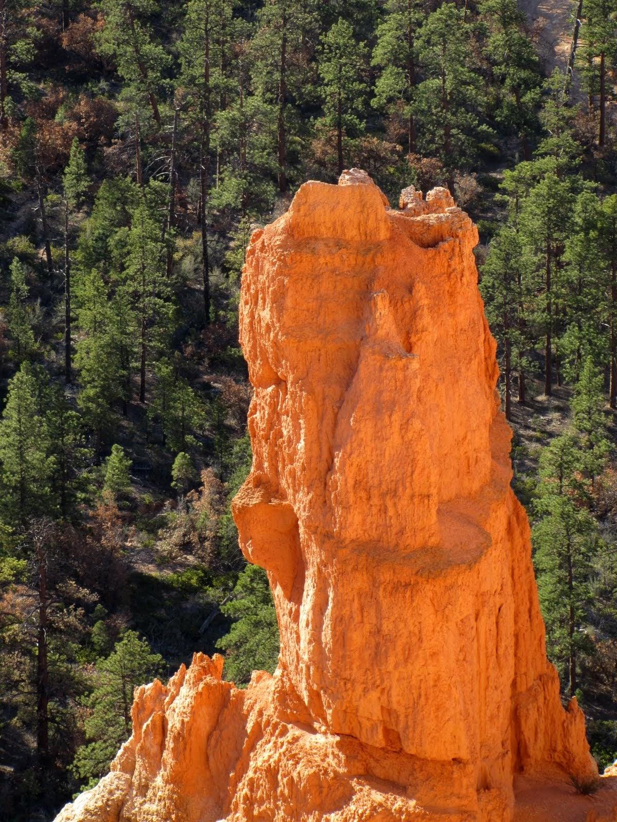 The Orange Tower