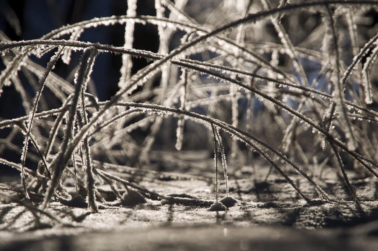 Zimní větvičky 2010 - _DSC9917