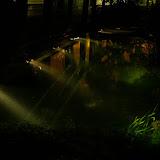 Nasvícené akvárium zhora