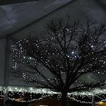 A kivilágított fa fölé sátrat húztak