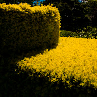 goldengate_park_9