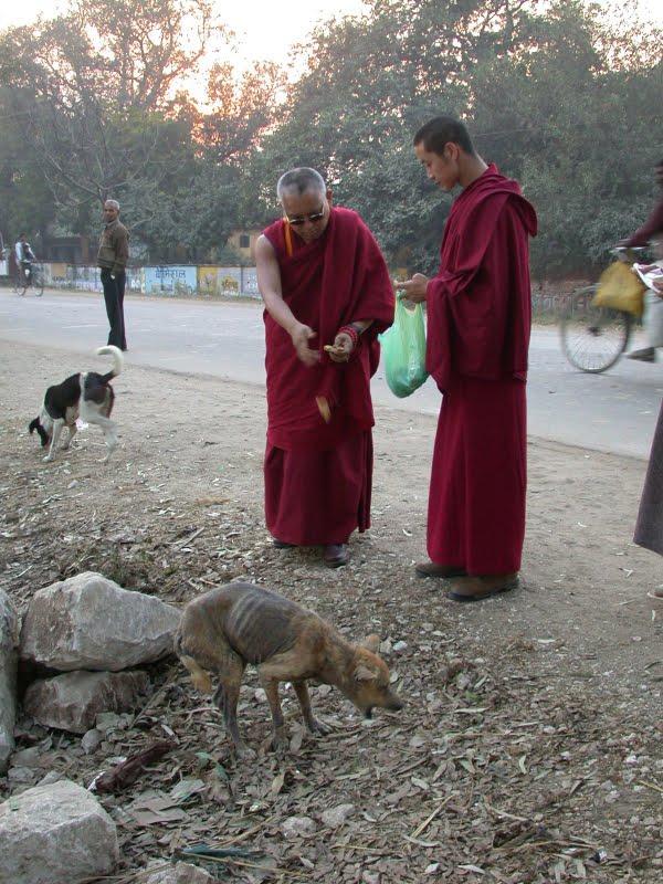 Lama Zopa Rinpoche feeding a very sick dog in India