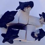 rondini 2 20x30 cm cadauna gress nero 2016 Disponibili