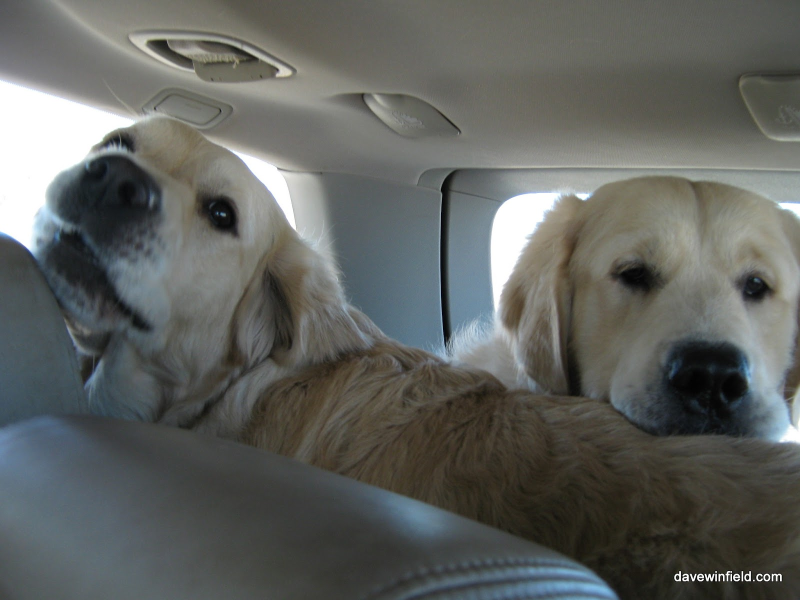 Jess and Jake in the back of the Doggie Wagon.