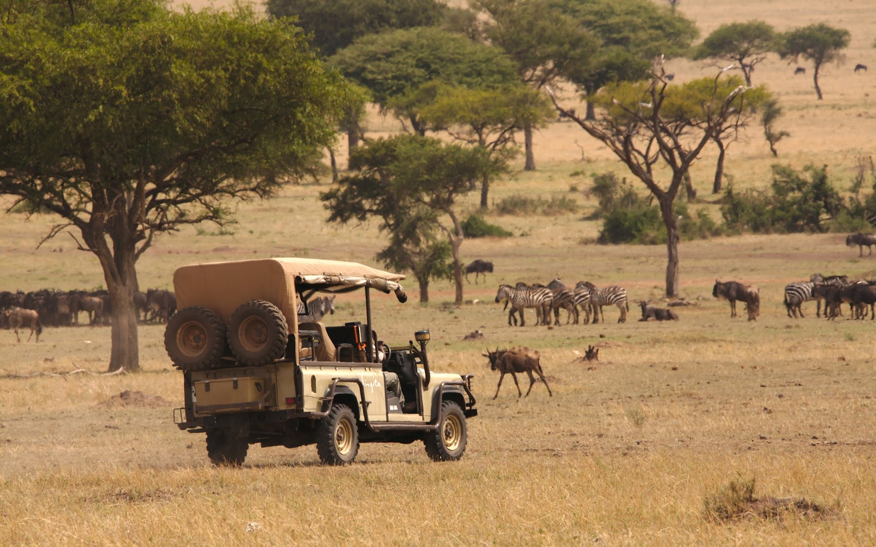 Guided game drive