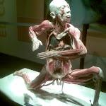 Bodies revealed 2010
